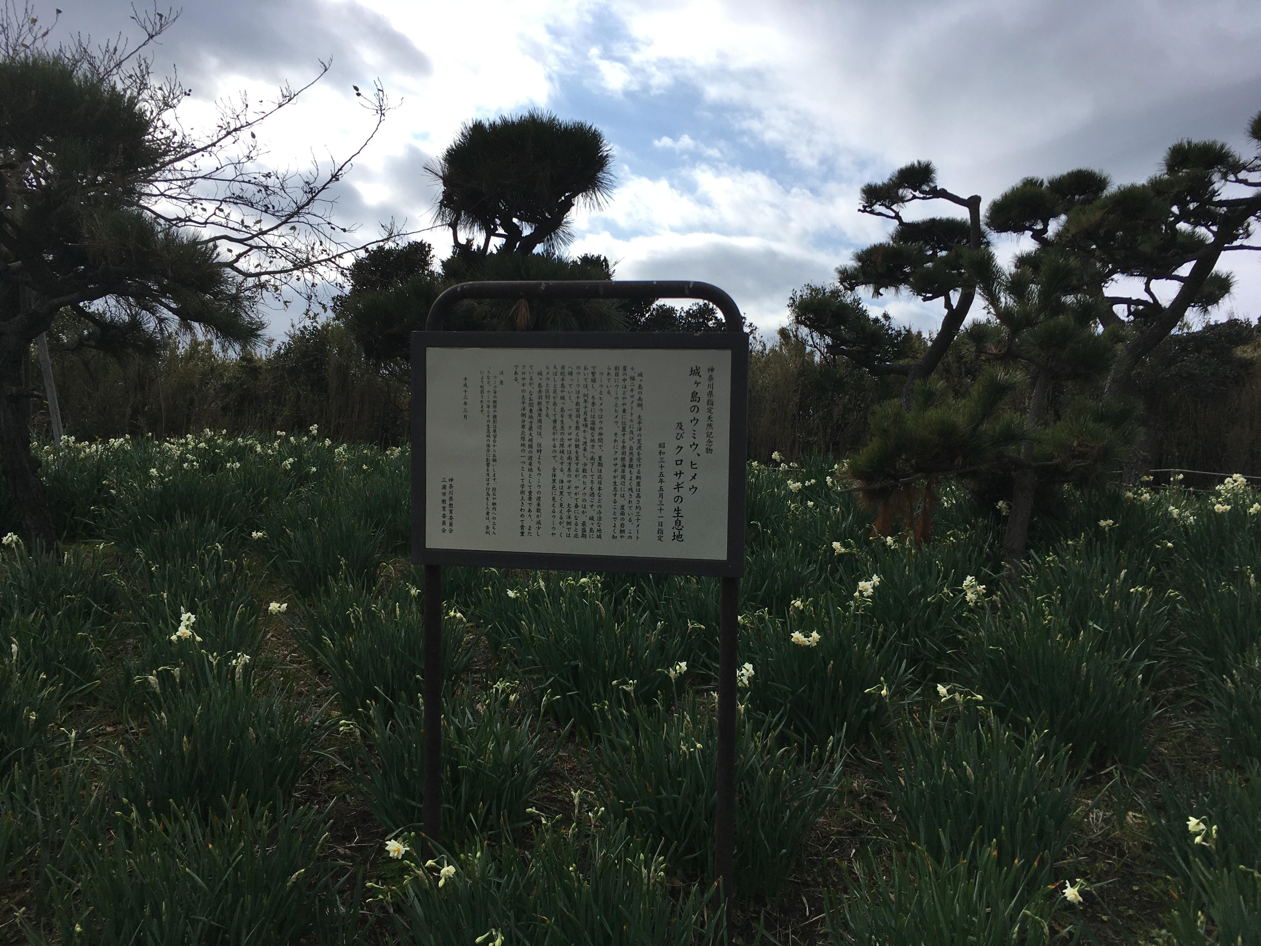 城ヶ島のウミウ、ヒメウ及びクロサギの生息地