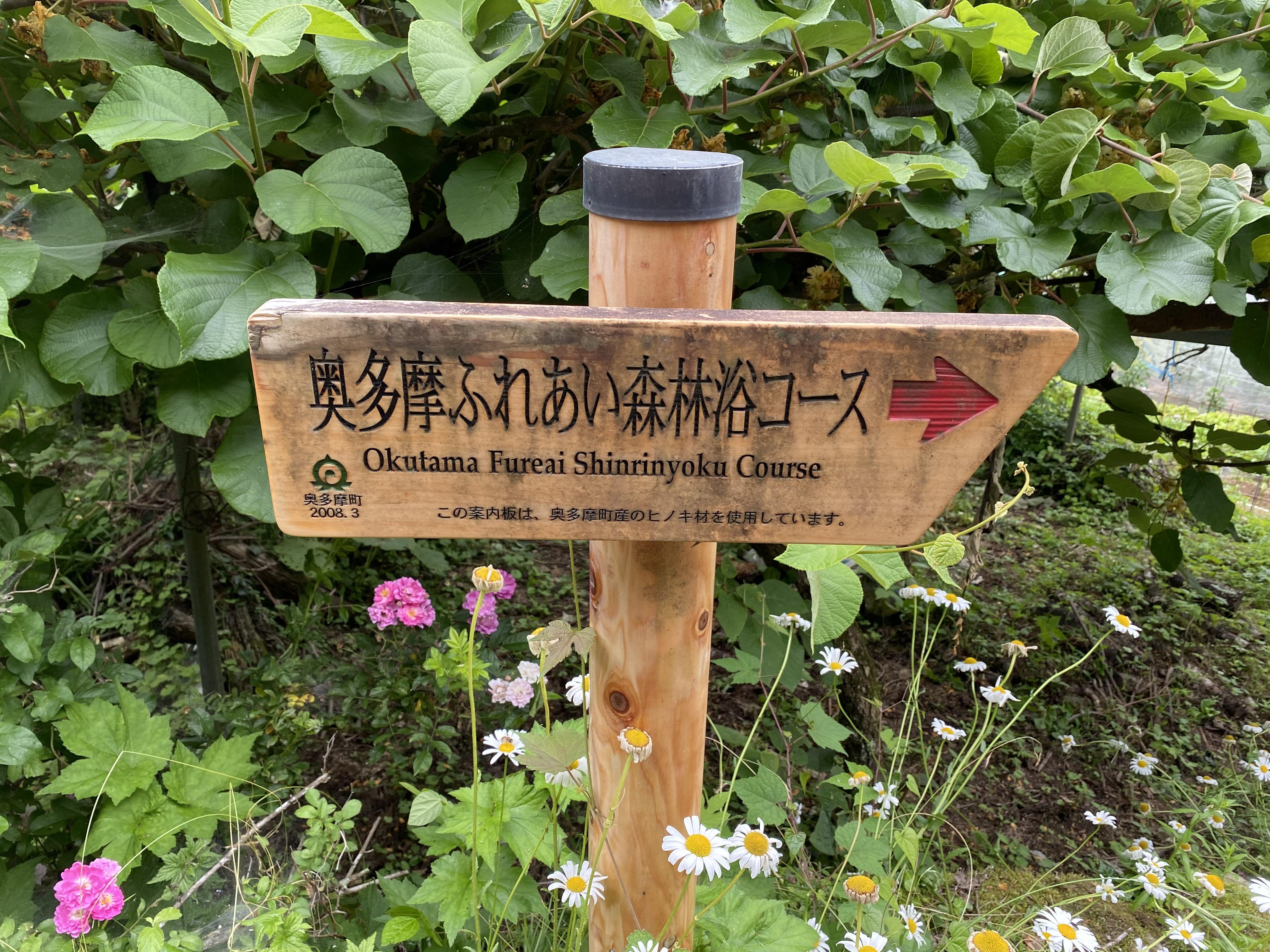 奥多摩ふれあい森林浴コース→