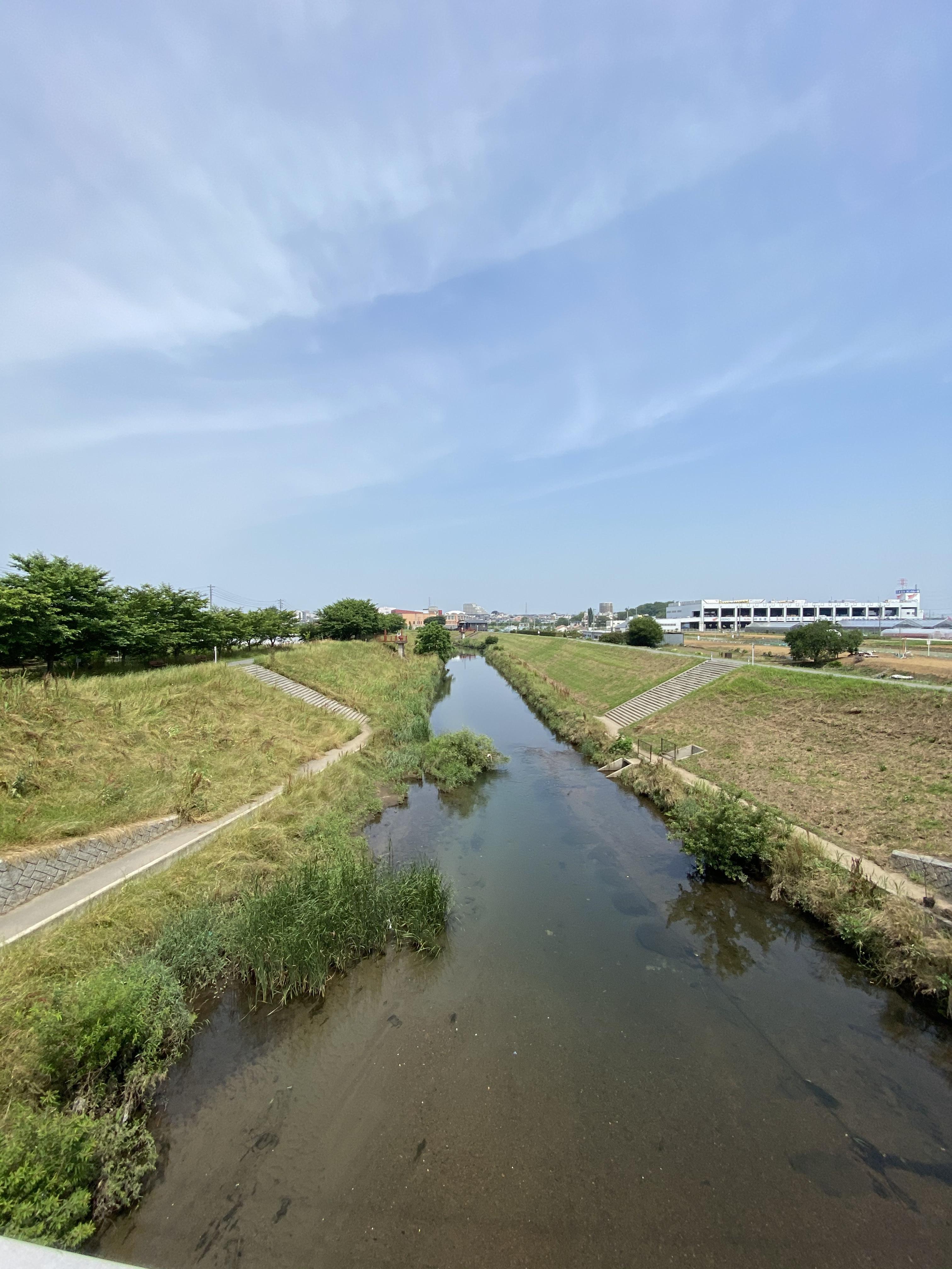 黒目川(花ノ木橋(城山通り))から上流を眺める
