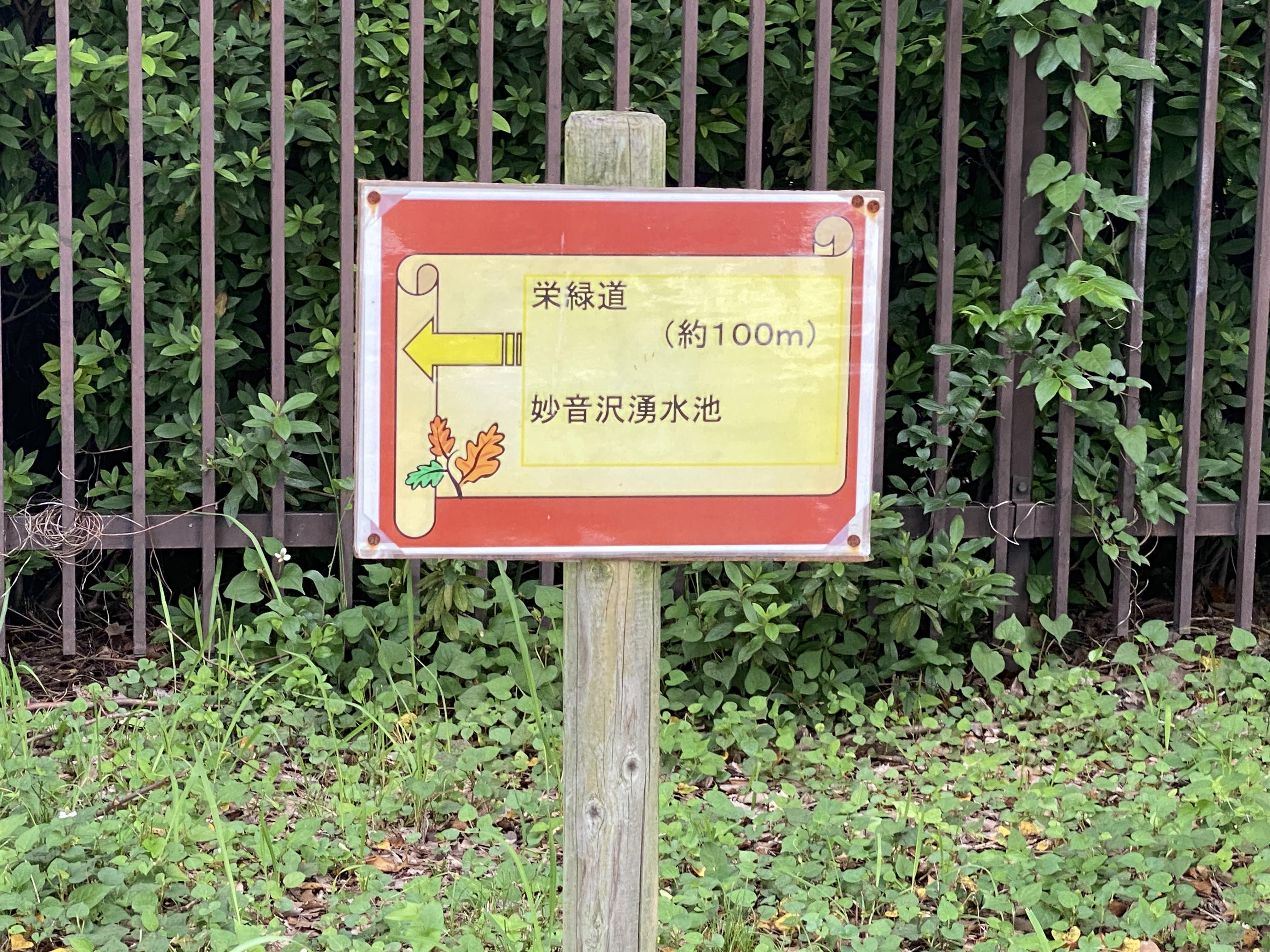 ←栄緑道・妙音沢湧水池