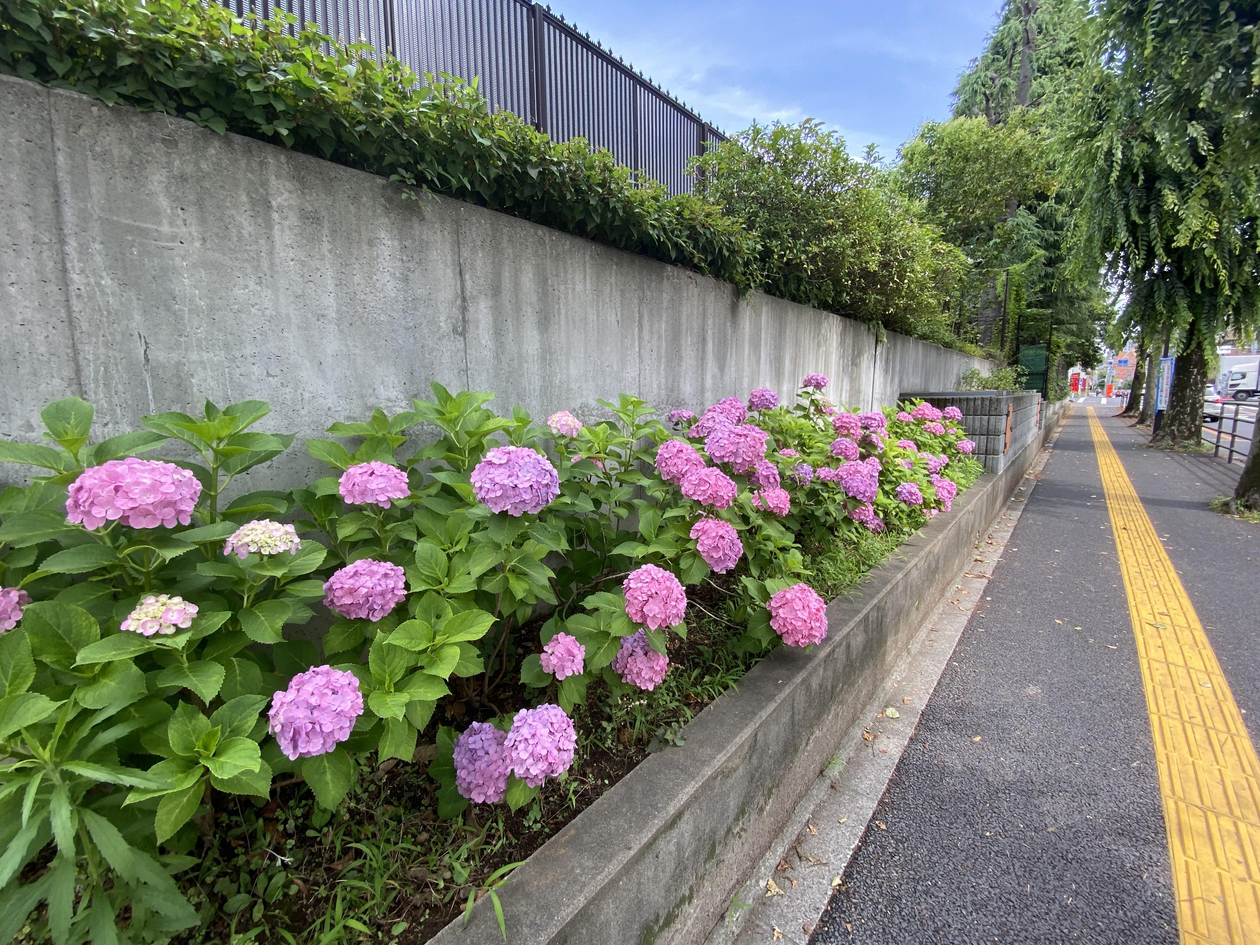 公園通り(広沢原児童公園前