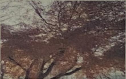 2011.12.8新座緑道にて撮影