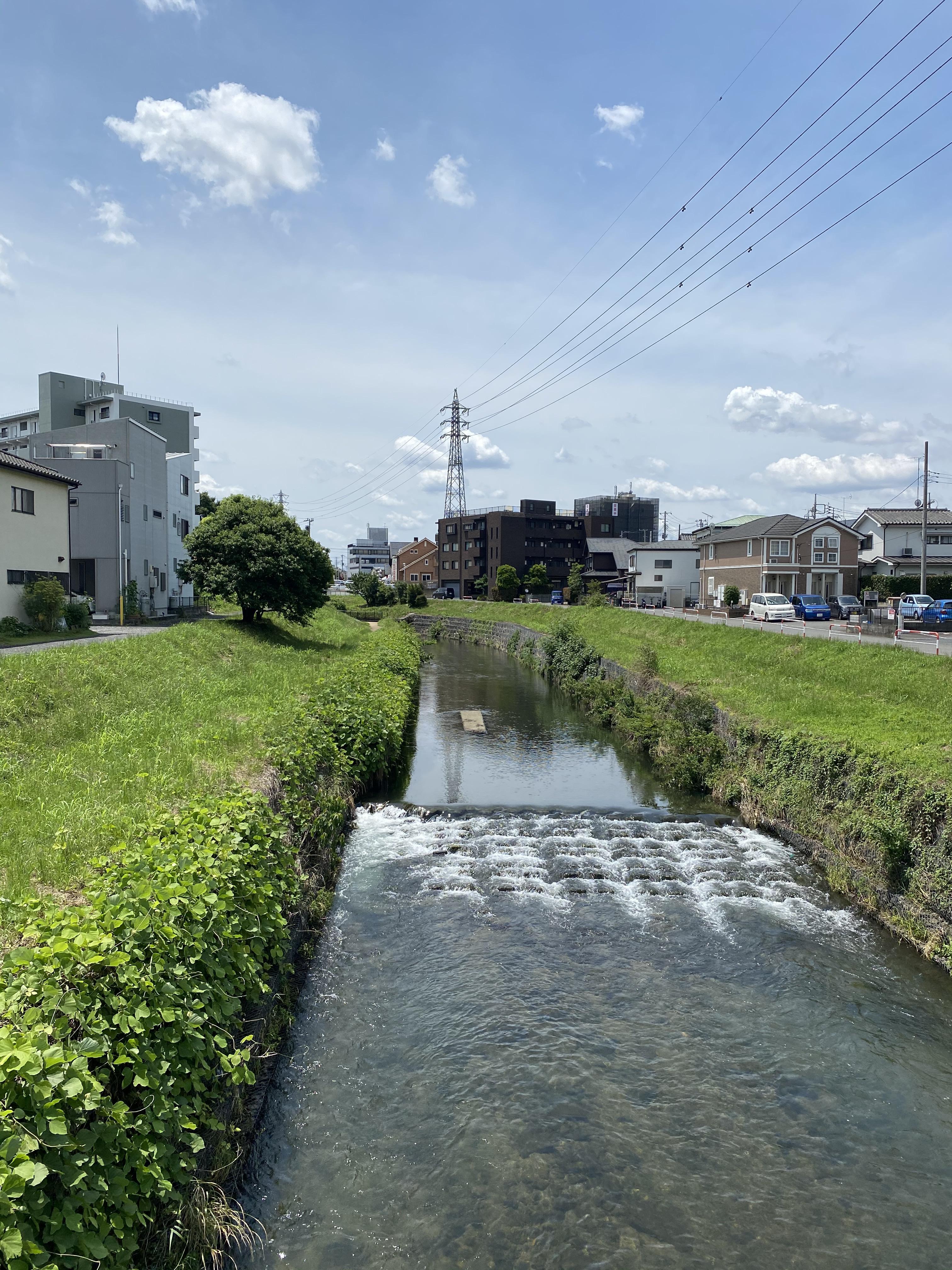 黒目川橋から下流を眺める