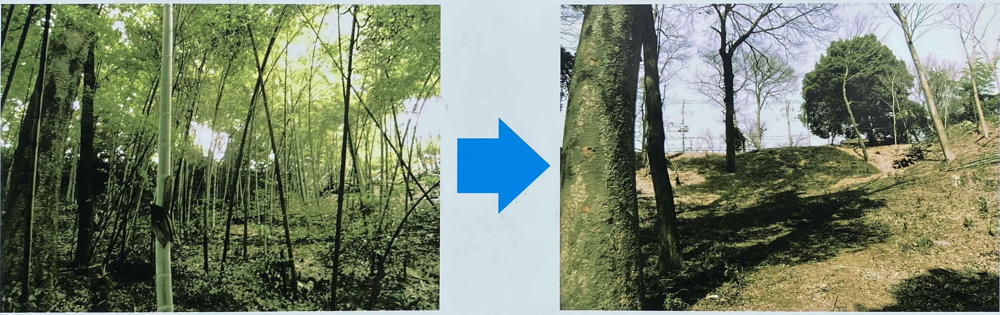 森林を再生
