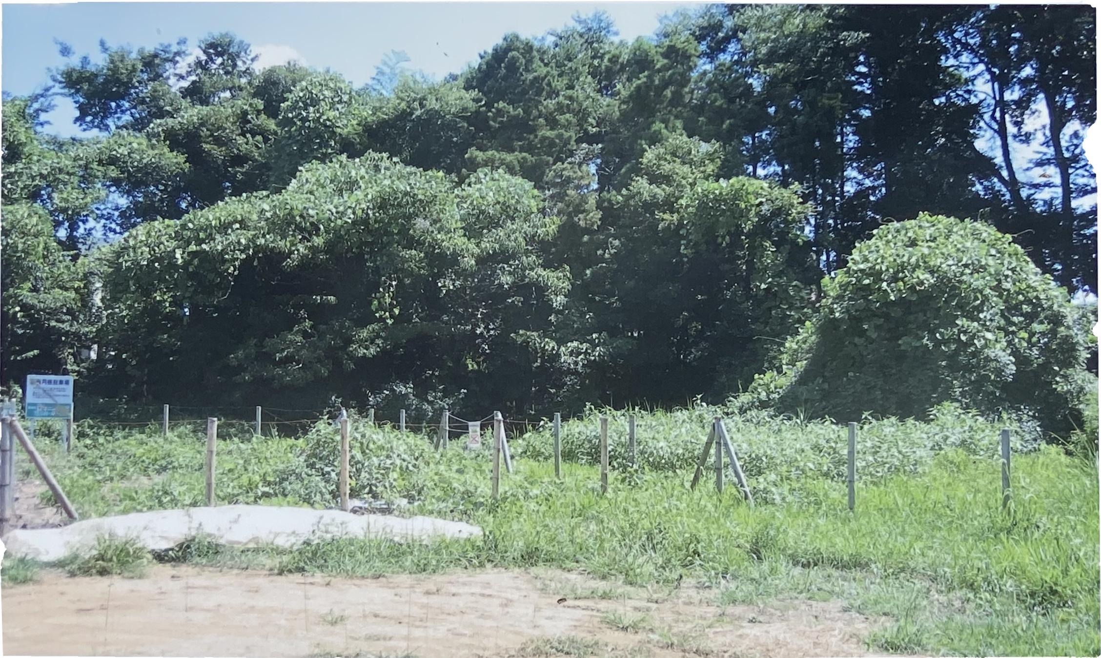 平成22年8月に整備する前の湧水代官水