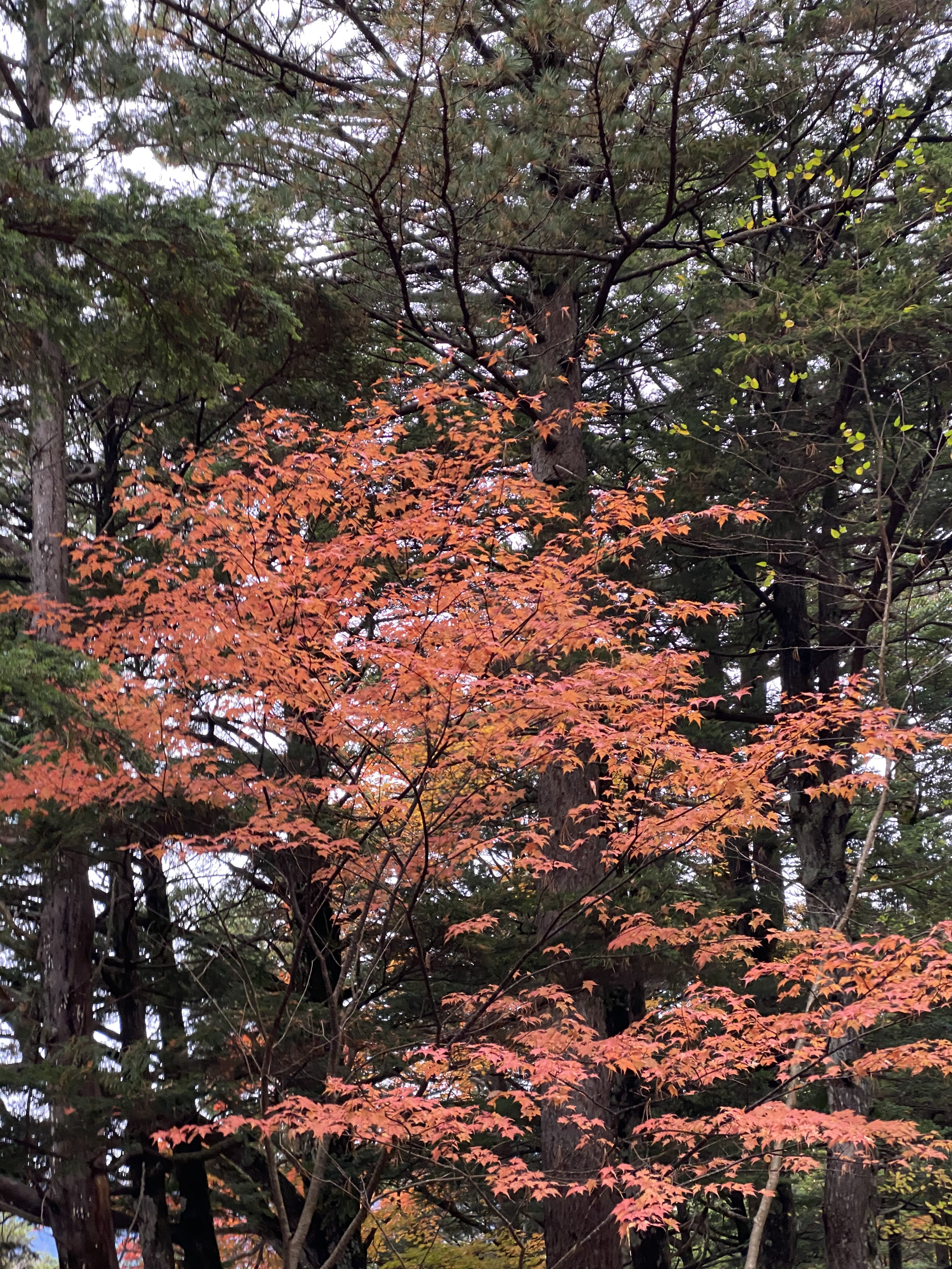 梓川右岸の紅葉